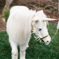 Unicorn Meet & Greet